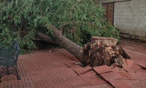 Una tromba de agua anega Villena y derriba árboles