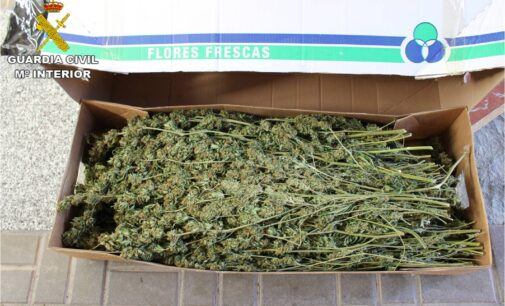 La Guardia Civil intercepta el transporte de cerca de 100 kilos de marihuana entre Alicante y Lleida