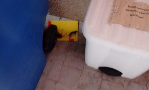 Denuncian una plaga de ratas y ratones en la cárcel de Villena