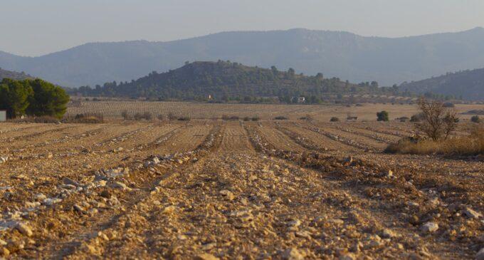Salvatierra denuncia la  transformación de 100 hectáreas de un hábitat de  importancia para las aves esteparias