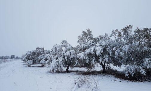La Policía Local desaconseja desplazarse para ver la nieve