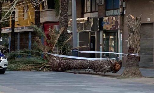 Alerta por fuertes rachas de viento en la comarca del Alto Vinalopó