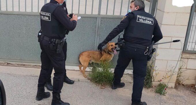 La Policía Local saca de la autovía a un perro