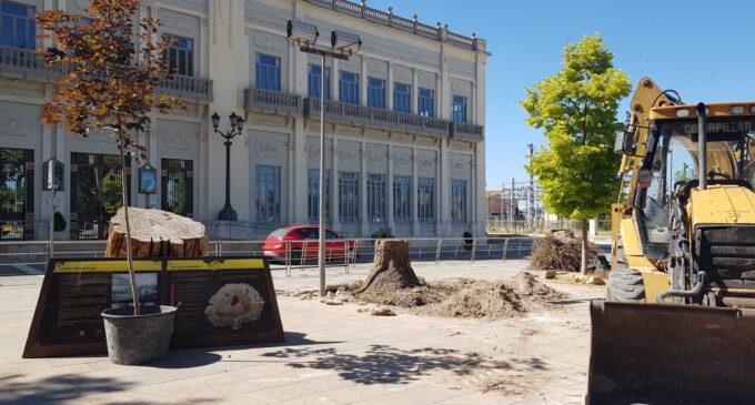 Parques y Jardines justifica la tala de tres olmos en el Paseo Chapí por motivos de seguridad