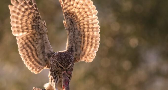 La exposición fotográfica de Miguel Ángel Berbegal reivindica la avifauna del Alto Vinalopó