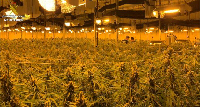 La Guardia Civil desarticula una organización criminal en Sax e incauta casi 5.000 plantas de marihuana
