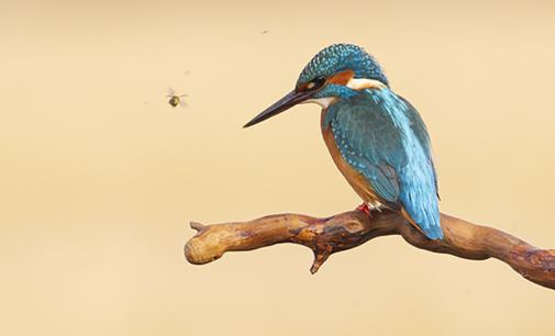 Medio Ambiente destaca el valor pedagógico de la expo fotográfica sobre avifauna de Berbegal