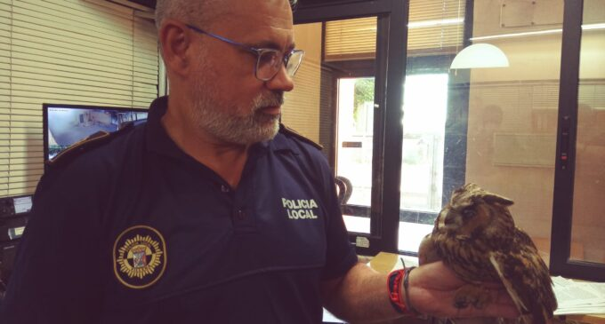 La Policía Local de Villena rescata a un búho chico