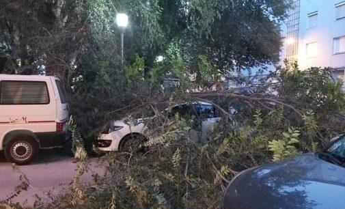 El PP solicita que se revise todo el arbolado de la ciudad para evitar nuevas caídas de grandes ramas