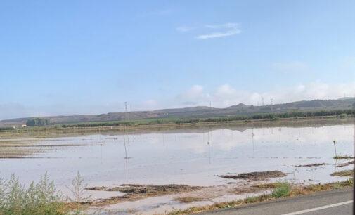 Una tromba de agua vuelve a anegar la antigua Laguna de Villena